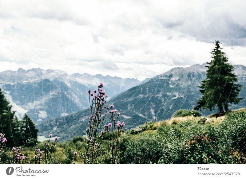 Blick ins Pitztal Ferien & Urlaub & Reisen Tourismus wandern Umwelt Natur Landschaft Himmel Wolken Sommer Schönes Wetter Pflanze Blume Sträucher Alpen