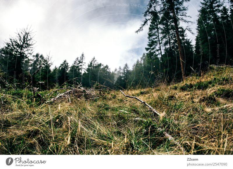 Pilzezeit Berge u. Gebirge wandern Umwelt Natur Landschaft Sommer schlechtes Wetter Sträucher Wiese Wald Alpen nachhaltig natürlich Erholung Idylle Perspektive