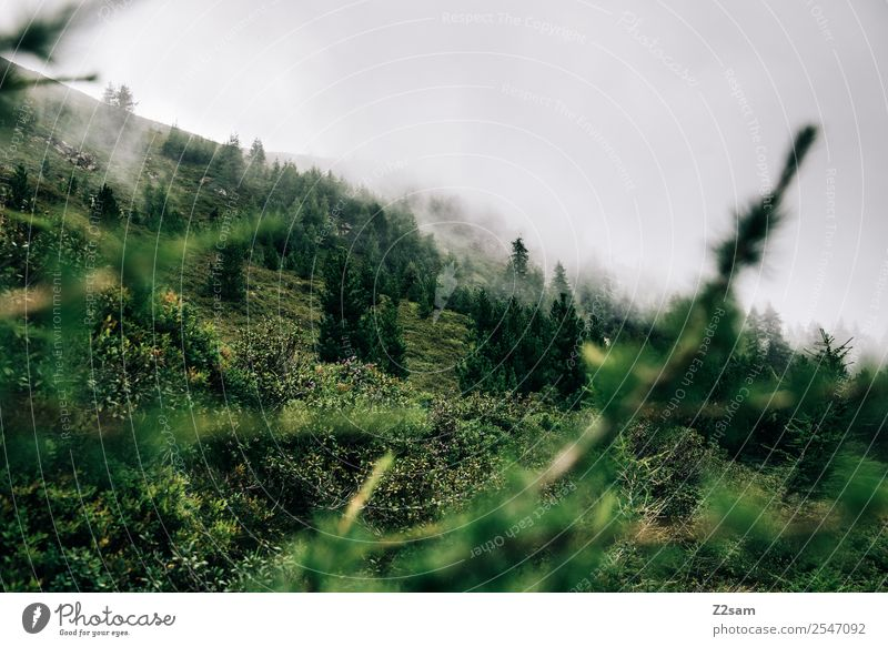 Gipfel in wolken wandern Umwelt Natur Landschaft Wolken Herbst Nebel Wiese Wald nachhaltig natürlich grün Gesundheit Idylle Stimmung Bundesland Tirol Österreich