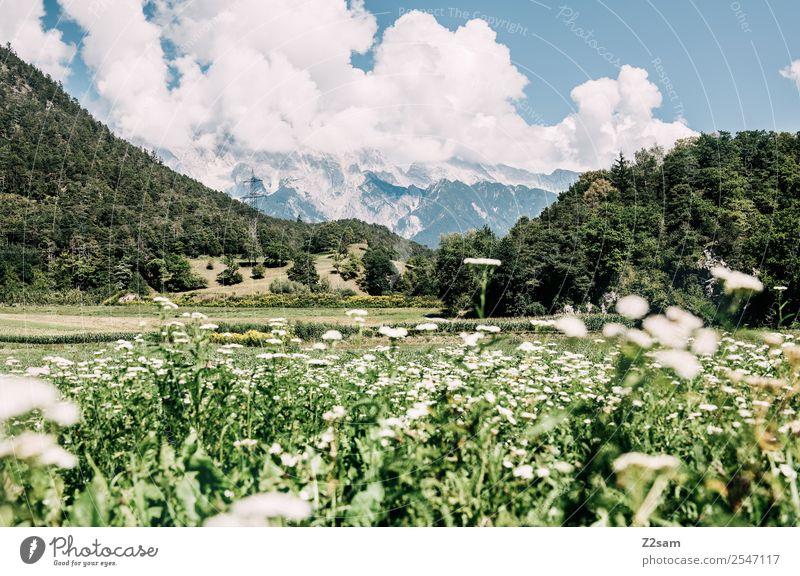 Inntal Ferien & Urlaub & Reisen Ausflug wandern Umwelt Natur Landschaft Sommer Schönes Wetter Pflanze Blume Gras Alpen Berge u. Gebirge ästhetisch frisch