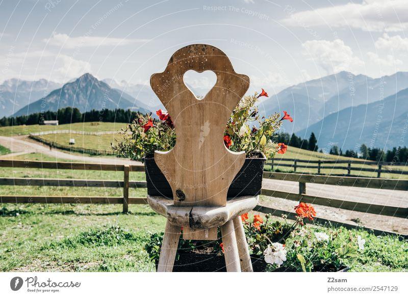Love the Alps Berge u. Gebirge wandern Umwelt Natur Landschaft Sommer Schönes Wetter Blume Wiese Alpen Stuhl Holzstuhl Freundlichkeit natürlich mehrfarbig grün