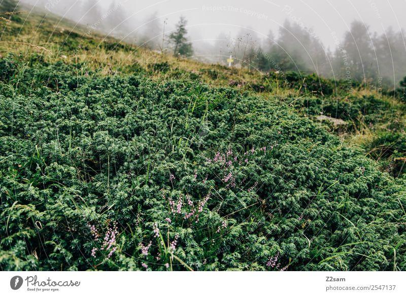 Alpen | Pflanzen | Nebel Berge u. Gebirge wandern Natur Landschaft Tier Herbst schlechtes Wetter Sträucher Wald dunkel nachhaltig natürlich grün ruhig