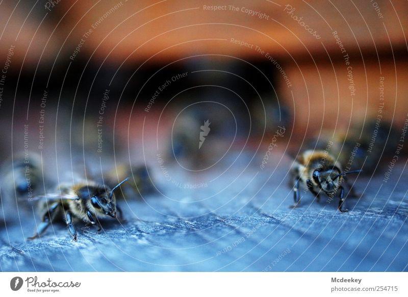 other colonies 5 blau schwarz Tier Auge gelb Holz grau braun Orange rosa sitzen fliegen Tierfuß natürlich Wildtier