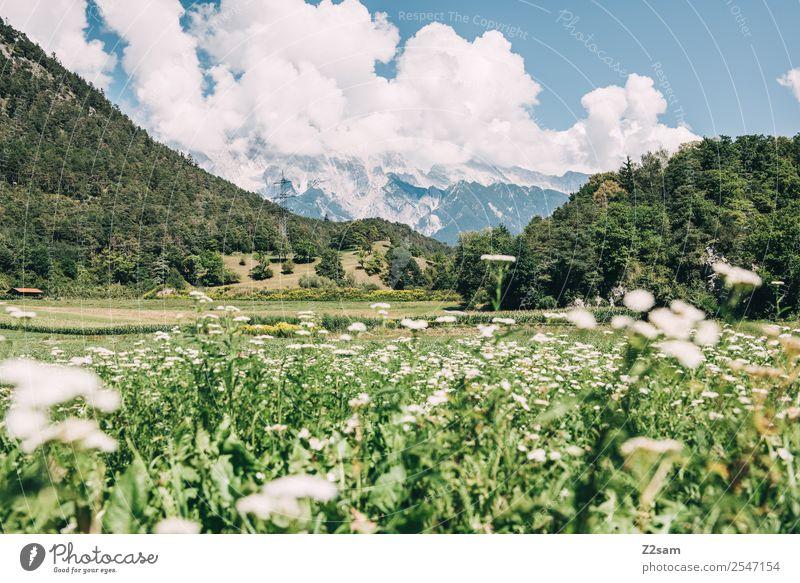 Inntal / Austria Ferien & Urlaub & Reisen Ausflug wandern Umwelt Natur Landschaft Wolken Sommer Schönes Wetter Blume Wiese Alpen Berge u. Gebirge Gipfel