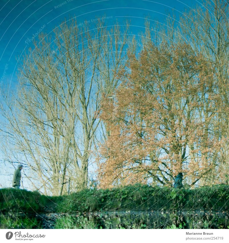 doppelte Spiegelung Mensch Umwelt Natur Wasser Baum blau gelb grün Park Bach Fluss Wasseroberfläche Reflexion & Spiegelung Flussufer Himmel gehen Bewegung