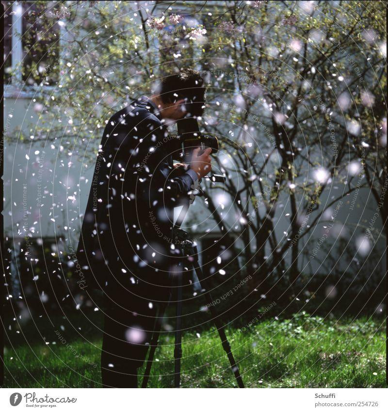 Daniel im Blütenregen Mensch Natur schön Baum Pflanze Freude Glück Frühling Freundschaft rosa maskulin außergewöhnlich Schönes Wetter Fotografieren