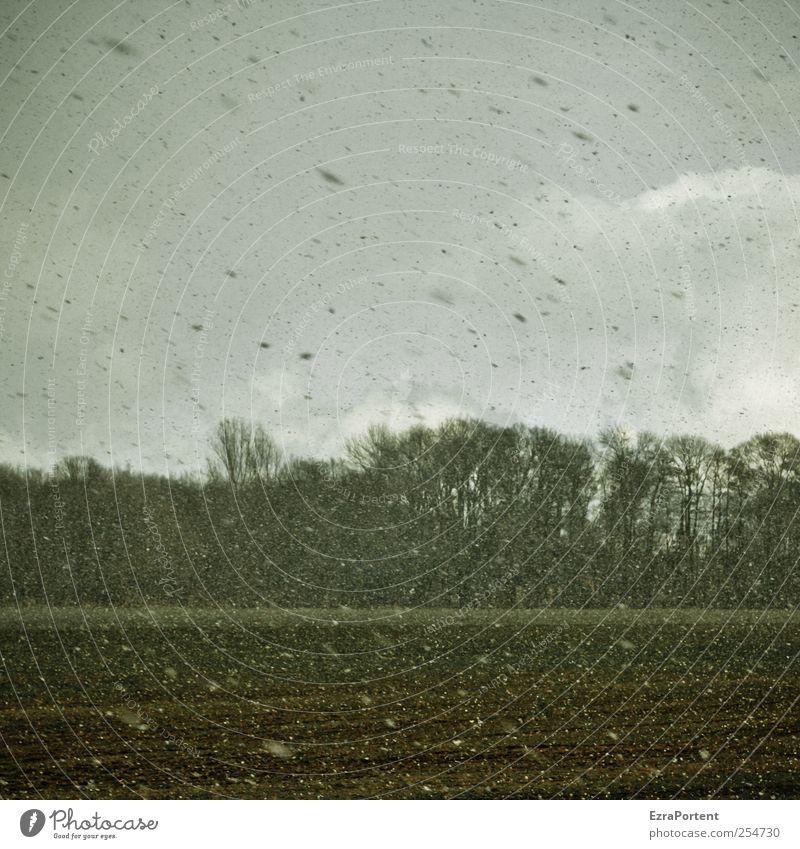 tangle flakes Natur Landschaft Pflanze Erde Luft Himmel Wolken Herbst Winter schlechtes Wetter Schnee Schneefall Baum Feld Wald dunkel braun grau grün
