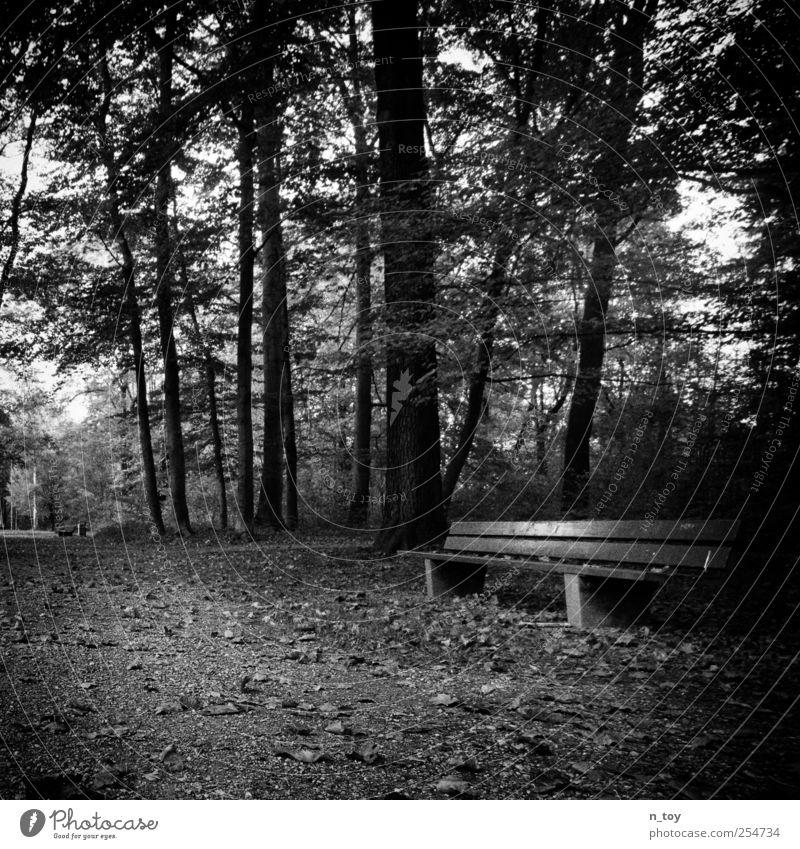 die Bank Natur weiß Baum ruhig schwarz Wald Herbst Landschaft Wege & Pfade Stimmung Park sitzen Pause Frieden Ruhepunkt