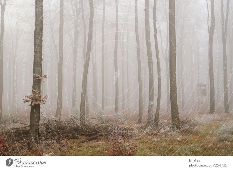 Nebelwelt Natur Pflanze ruhig Einsamkeit Wald Herbst kalt Wetter Nebel außergewöhnlich Wandel & Veränderung viele Idylle gefroren Baumstamm kahl