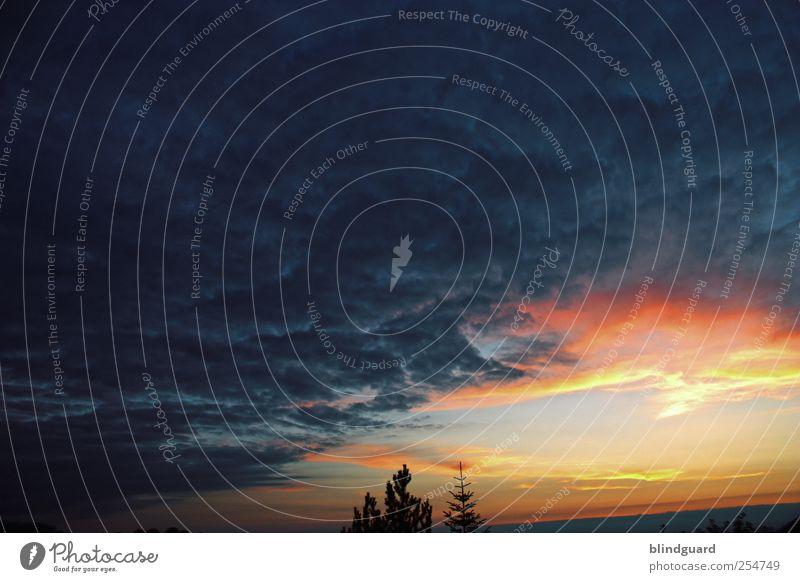 Shapes Of Things To Come [II] Umwelt Natur Pflanze Himmel Wolken Gewitterwolken Nachthimmel Sonne Sonnenaufgang Sonnenuntergang Sommer Wetter Unwetter Baum