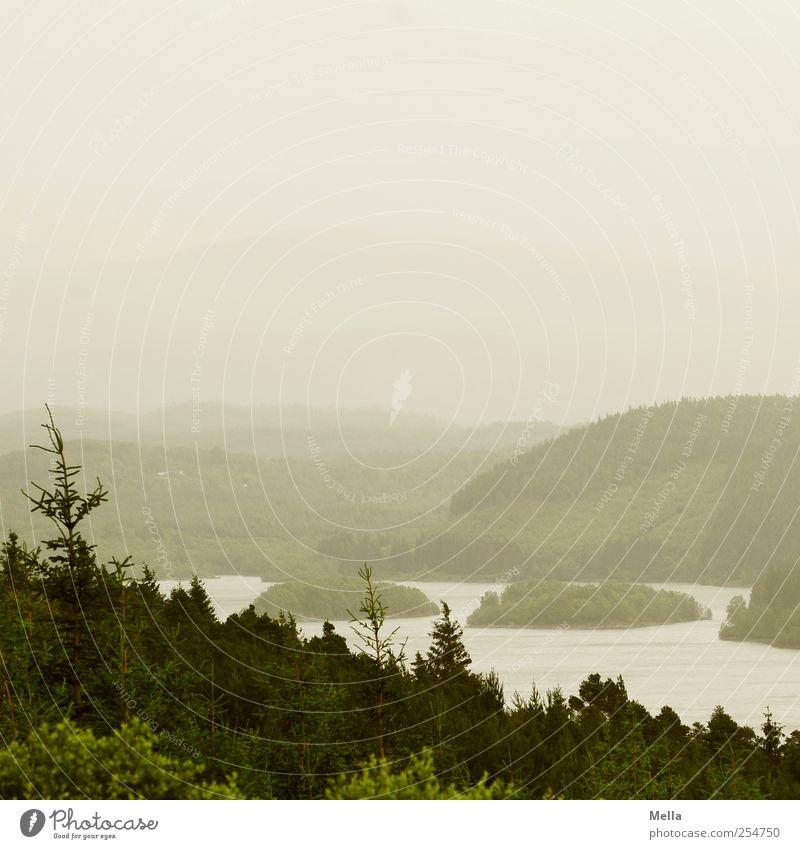 Der Horizont ist gerade. Natur grün Baum Ferne Wald Umwelt Landschaft grau See Nebel natürlich Insel trist Hügel Tanne Neigung