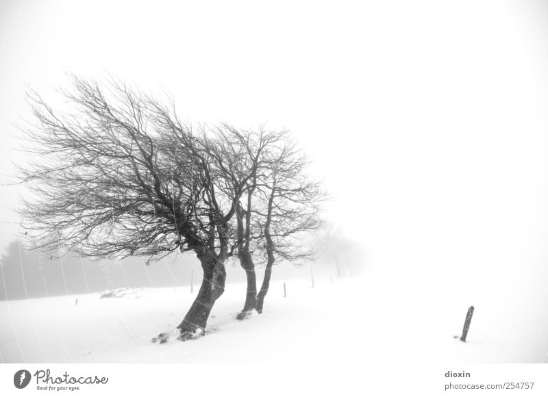 I dreamed about last winter Pt.3 Umwelt Natur Landschaft Winter Klima Wetter schlechtes Wetter Nebel Eis Frost Schnee Pflanze Baum Baumstamm Äste Schauinsland
