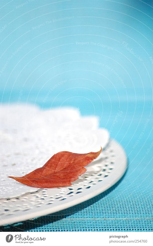 Das letzte ... Erntedankfest Herbst Blatt Schalen & Schüsseln Dekoration & Verzierung liegen verblüht warten alt kalt blau rot Stimmung ruhig Sehnsucht