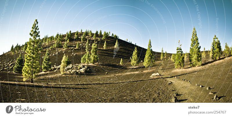 schwarzbodenwald Natur blau grün schwarz Wege & Pfade Stein Felsen Hügel Surrealismus Vulkan Wolkenloser Himmel Geröll Teneriffa Pinie