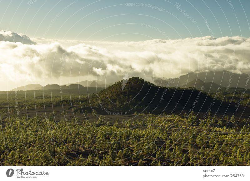 Wolkenberg blau grün Ferne Wald Landschaft braun Horizont Hügel Gipfel Pinie