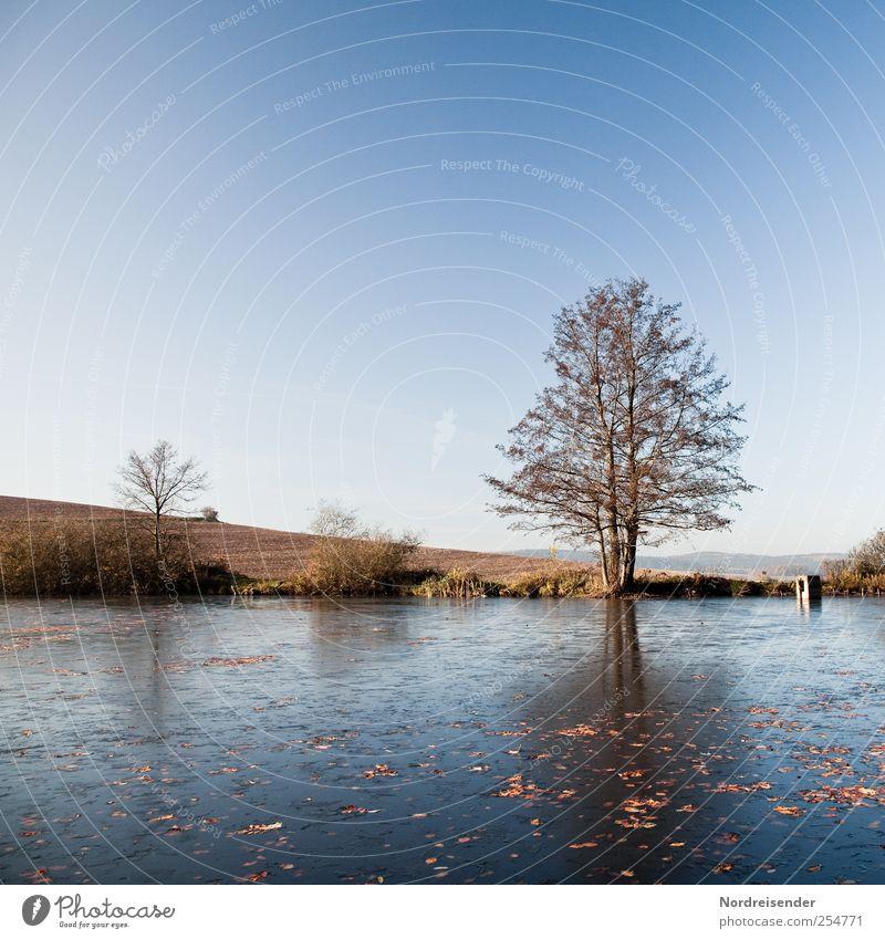 Erstes Eis... Himmel Natur Baum ruhig Erholung Herbst Landschaft Stimmung Ausflug Klima Frost Vergänglichkeit Schönes Wetter Herbstlaub Teich