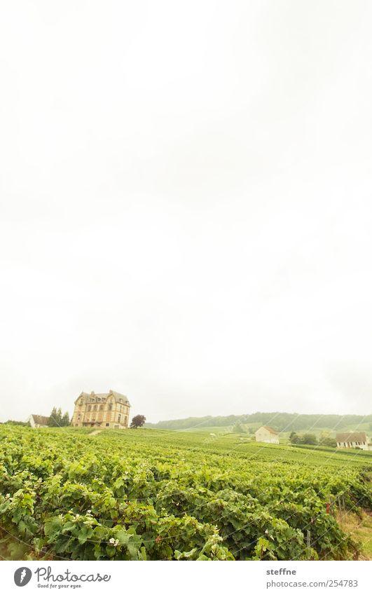 Schampannjerlaune Umwelt Landschaft Himmel Sommer Wein Weinberg Champagner sacy reims Frankreich Traumhaus Dekadenz genießen Reichtum Weingut Weinbau Farbfoto