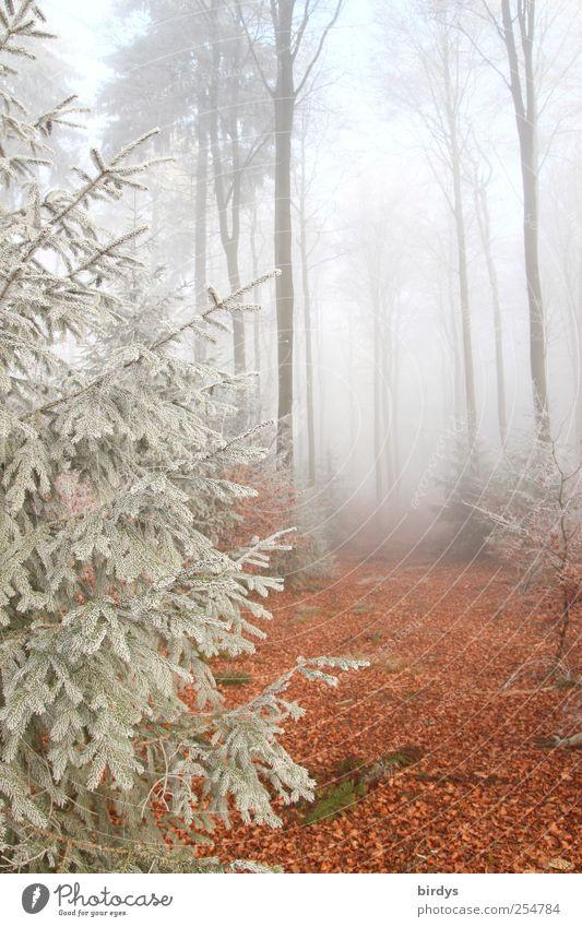 Spiel der Elemente Natur Baum ruhig Wald Herbst Landschaft hell Nebel ästhetisch authentisch Wandel & Veränderung einzigartig Urelemente Vergänglichkeit Idylle