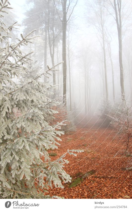 Spiel der Elemente Natur Landschaft Urelemente Herbst Nebel Baum Wald ästhetisch authentisch ruhig einzigartig Idylle Vergänglichkeit Wandel & Veränderung
