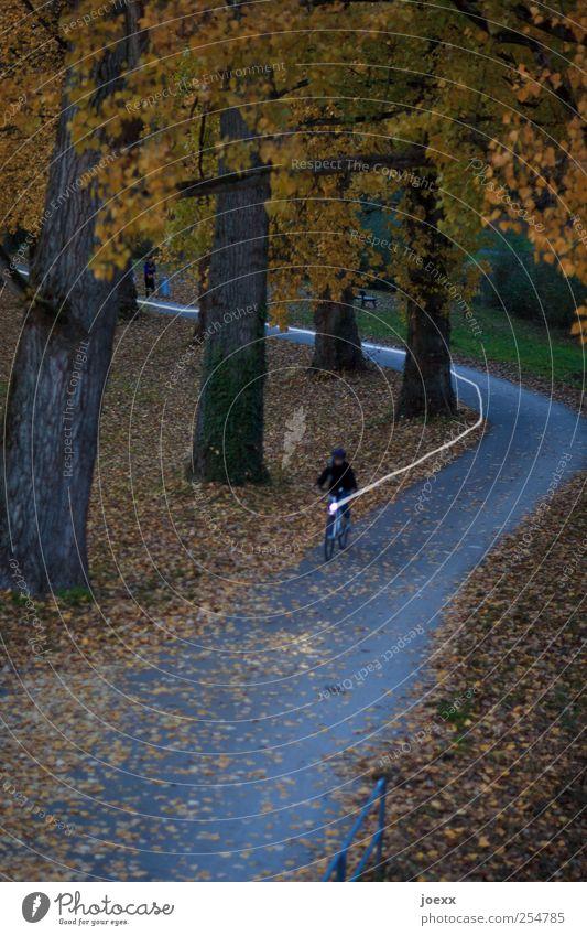 Heimweg Mensch Baum gelb dunkel Bewegung Wege & Pfade Park Fahrrad fahren Fahrradfahren