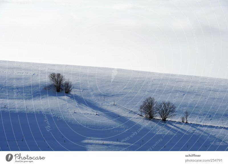 FRdrumrum | Schattenwurf II Pflanze Baum Landschaft Wolken Winter kalt Schnee Eis Sträucher Schönes Wetter Frost Weide Schneelandschaft Berghang Schattenspiel Schauinsland