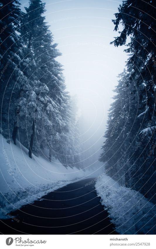 Winterstraße Ausflug Abenteuer Schnee Winterurlaub wandern Umwelt Natur Landschaft Pflanze Klima Klimawandel Nebel Schneefall Baum Wald Erholung genießen blau