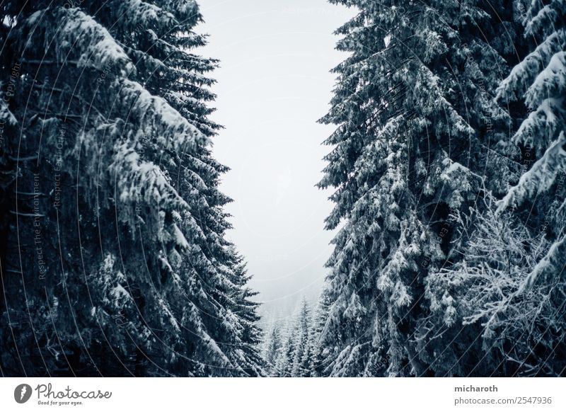 Bäume unter Schnee Ausflug Abenteuer wandern Umwelt Natur Winter Klima Klimawandel schlechtes Wetter Unwetter Eis Frost Baum Wald Einsamkeit Schwarzwald Tanne