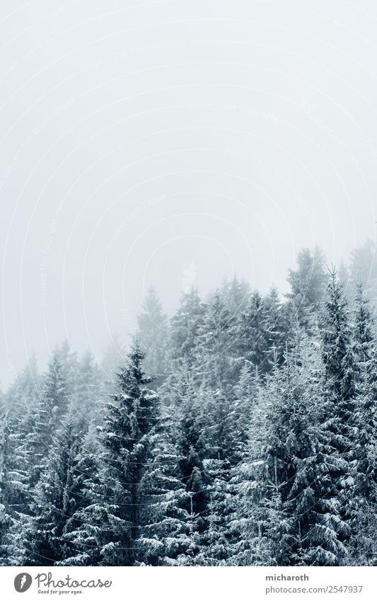 Winter Trees Ferien & Urlaub & Reisen Tourismus Ausflug Winterurlaub wandern Umwelt Natur Wolken Klima Klimawandel Wetter schlechtes Wetter Sturm Nebel Schnee