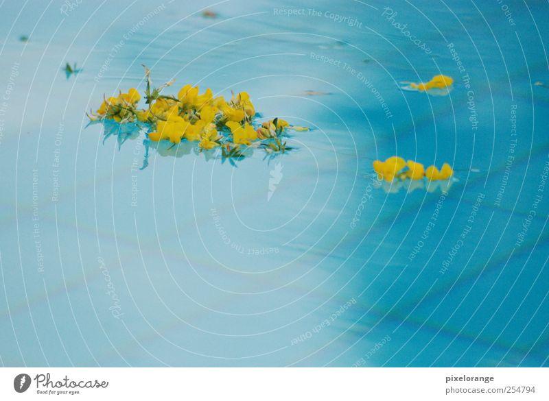 pool I Natur blau Wasser Pflanze Sommer ruhig gelb Erholung Blüte nass ästhetisch Schwimmbad Blühend Im Wasser treiben harmonisch Wasseroberfläche