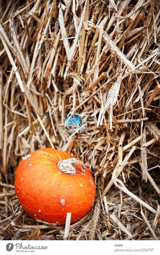 Strohmann Herbst klein Feste & Feiern orange natürlich Lebensmittel Dekoration & Verzierung niedlich rund Gemüse Bioprodukte herbstlich Halloween Stroh Kürbis Vegetarische Ernährung