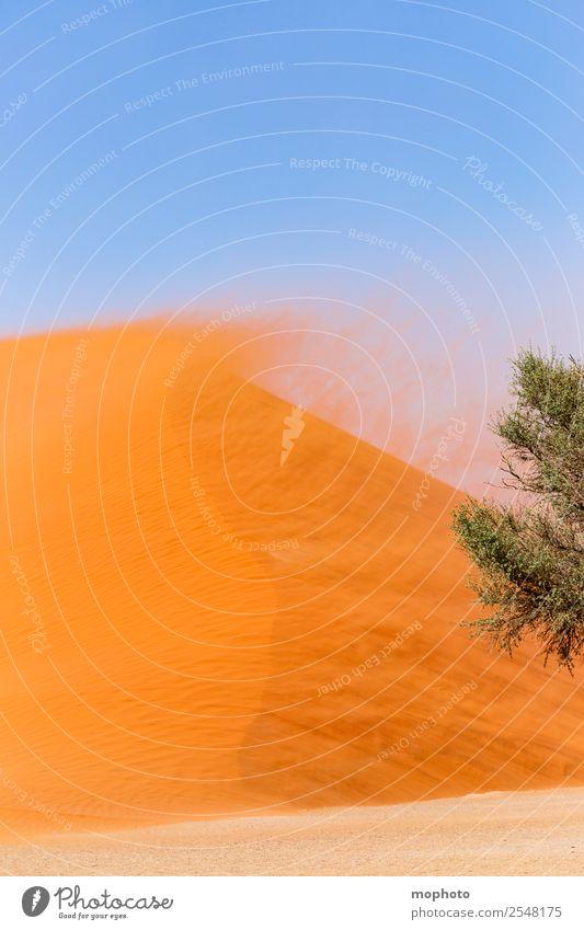 Düne 45 Ferien & Urlaub & Reisen Tourismus Ferne Safari Umwelt Natur Landschaft Sand Wetter schlechtes Wetter Unwetter Wind Sturm Wärme Baum Wüste Sossusvlei