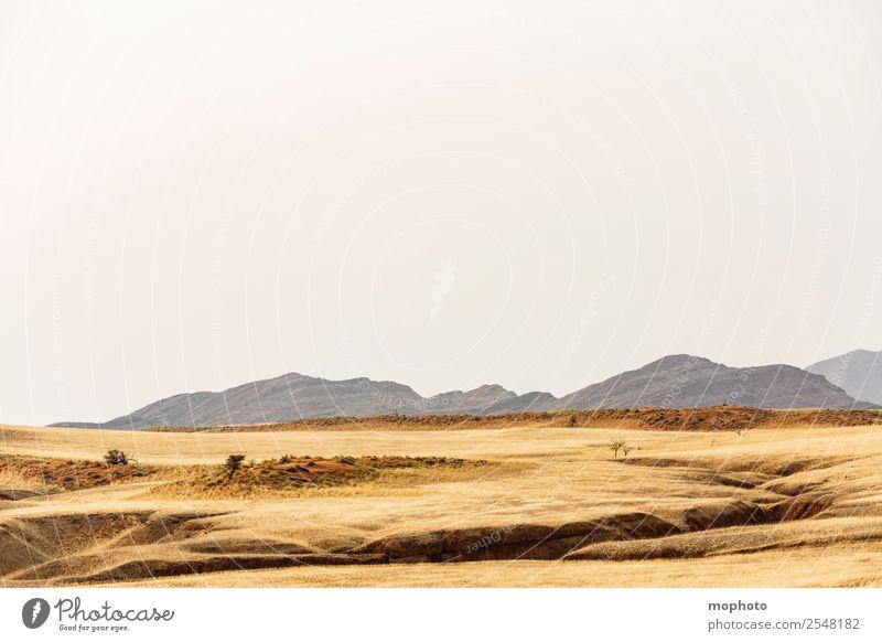 Wilde Schönheit Ferien & Urlaub & Reisen Tourismus Ausflug Abenteuer Ferne Safari Umwelt Natur Landschaft Urelemente Erde Wärme Dürre Gras Hügel