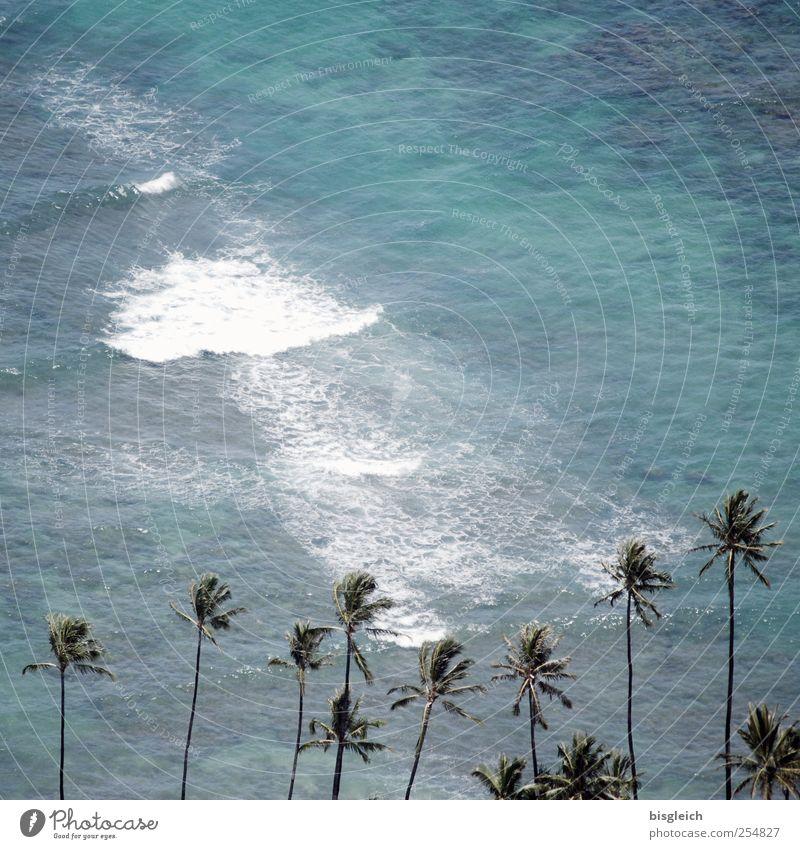 Hawaii II exotisch Sommer Sommerurlaub Strand Meer Wellen Schönes Wetter Palme Küste Pazifik Pazifikstrand Insel Honolulu USA Amerika blau grün Brandung