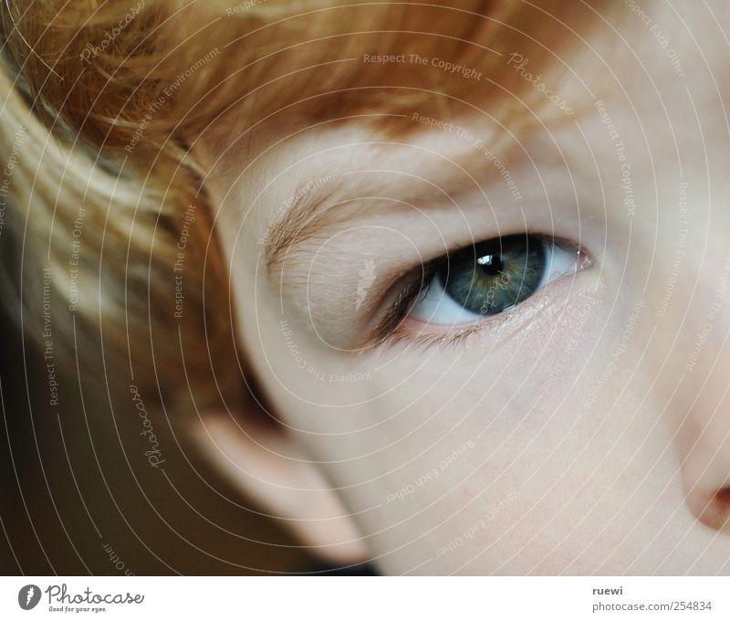 Augenblick Mensch Kind Gesicht Auge Junge Haare & Frisuren Kopf blond Kindheit Haut Kleinkind Pony Bildausschnitt rothaarig Anschnitt Augenbraue