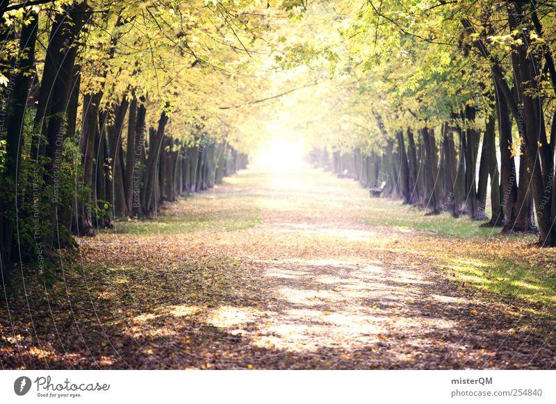 Lichtblick. Natur grün Baum Pflanze Blatt ruhig Herbst Umwelt Landschaft Wege & Pfade Park ästhetisch Hoffnung Spaziergang Herbstlaub Allee