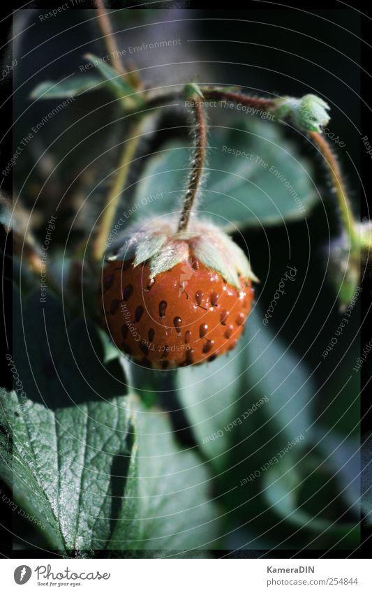 Allgemeiner Titel Natur grün schön rot Pflanze schwarz Umwelt Herbst Frühling Garten Gesundheit Wachstum ästhetisch Dekoration & Verzierung Hoffnung Lebensfreude