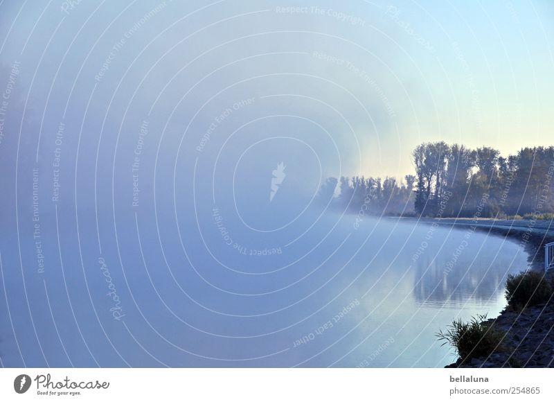 Ich habe heute leider keinen Titel für dich. Umwelt Natur Landschaft Wasser Himmel Wolkenloser Himmel Herbst Schönes Wetter Nebel Baum Wildpflanze Flussufer