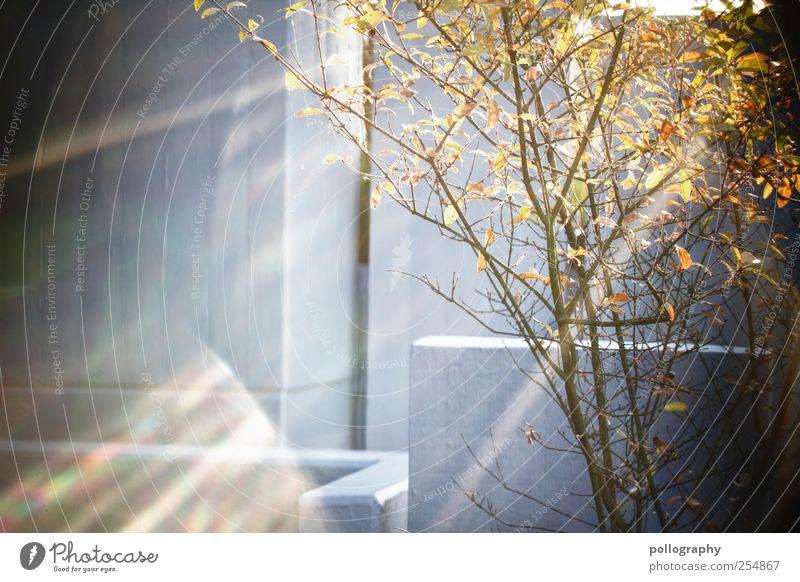 Catch the sun Natur Pflanze Sonne Blatt gelb Herbst Leben Wand Garten Mauer träumen orange Beleuchtung gold Fassade Beton