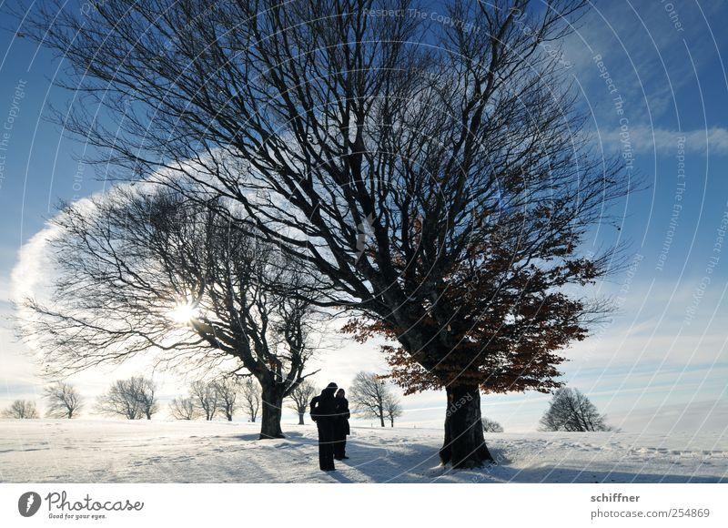 Märchen Buchen Mensch 2 Natur Landschaft Pflanze Urelemente Himmel Sonne Sonnenlicht Winter Schönes Wetter Eis Frost Schnee Baum ästhetisch außergewöhnlich kalt