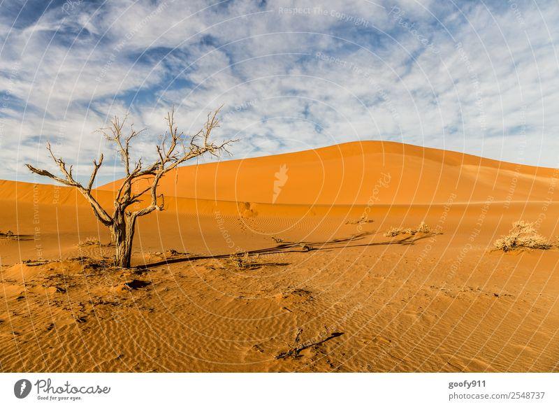 Sossusvlei/Namibia Ferien & Urlaub & Reisen Tourismus Ausflug Abenteuer Ferne Sonne Umwelt Natur Landschaft Erde Sand Sonnenlicht Schönes Wetter Wärme Dürre