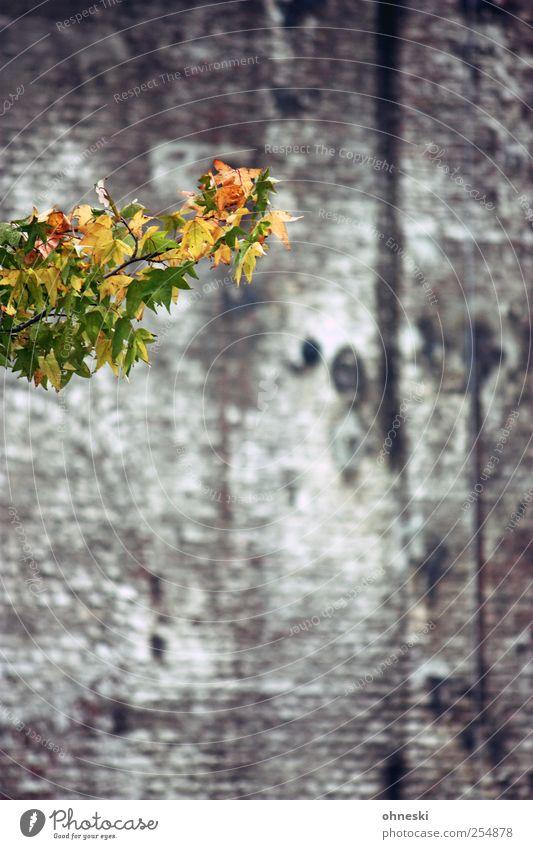 Hallo Herbst Baum Blatt Ast Zweige u. Äste Gebäude Mauer Wand gelb grün Hoffnung Leben Farbfoto Außenaufnahme Strukturen & Formen Menschenleer