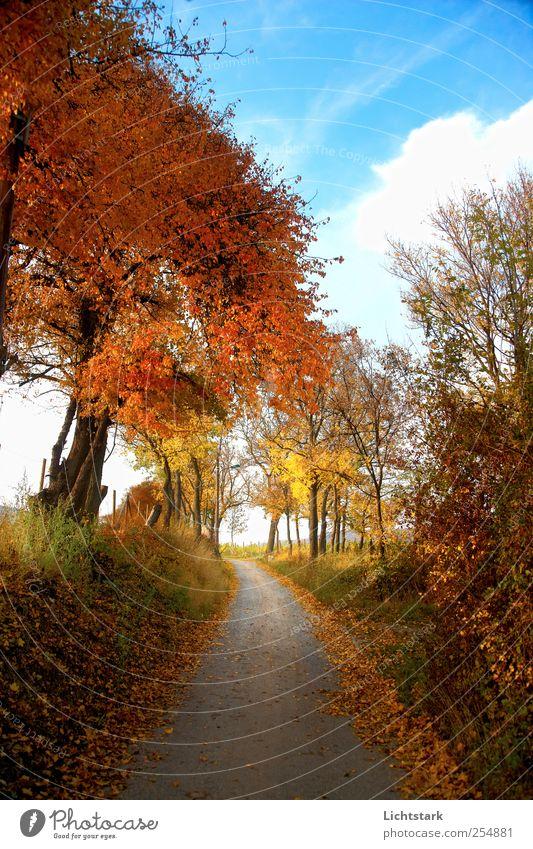 goldener herbst III Umwelt Natur Landschaft Himmel Wolken Herbst Schönes Wetter Baum Gras Sträucher Hügel Verkehr Wege & Pfade natürlich positiv blau braun gelb
