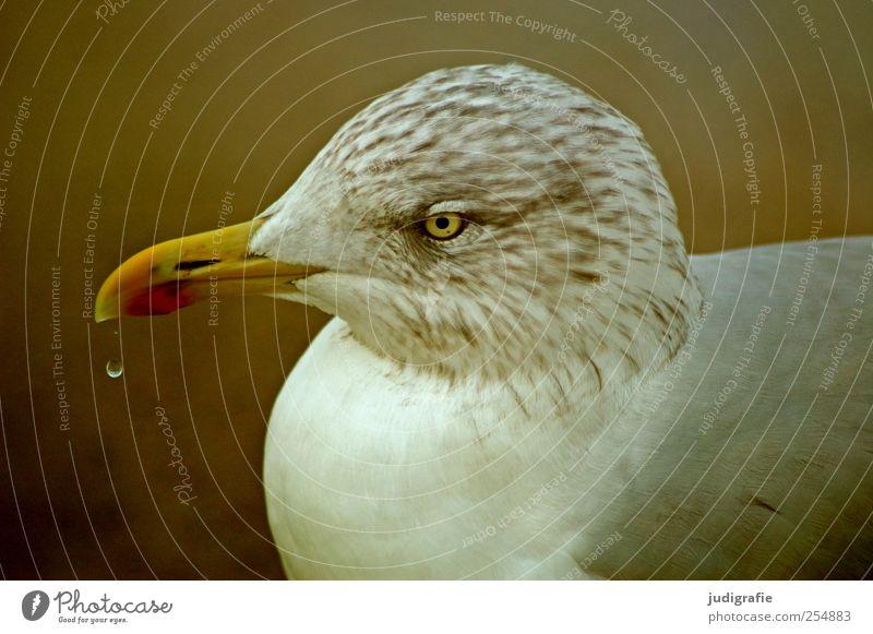 Möwe Natur Tier Wildtier Vogel 1 Leben Umwelt Wassertropfen Feder Schnabel Farbfoto Außenaufnahme Licht Tierporträt Profil Wegsehen
