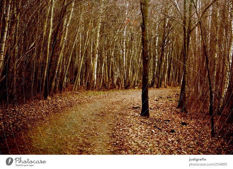 Weg Umwelt Natur Landschaft Pflanze Herbst Baum Blatt Wald dunkel natürlich braun Klima Wege & Pfade Kurve Farbfoto Gedeckte Farben Außenaufnahme Menschenleer