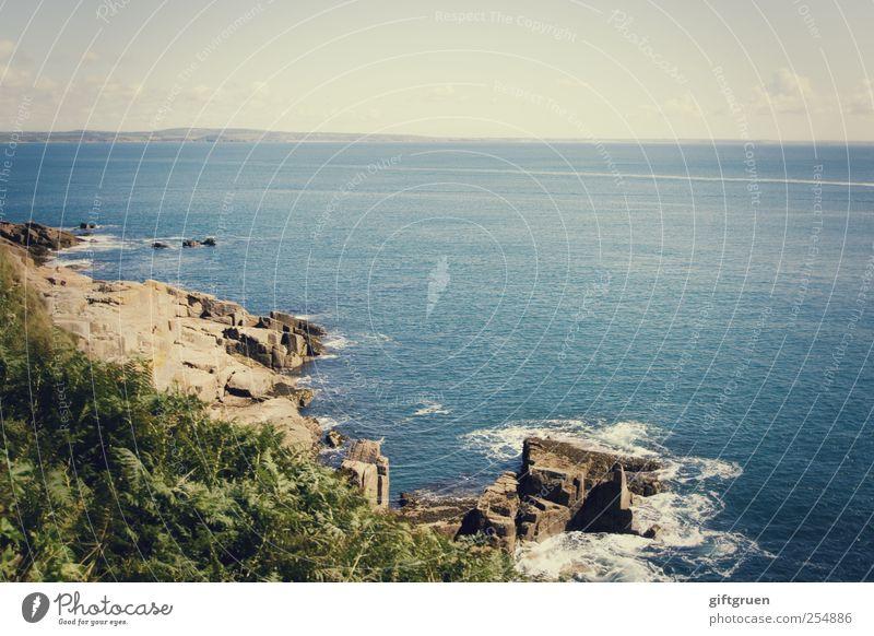over the ocean Umwelt Natur Landschaft Pflanze Urelemente Erde Wasser Himmel Wolken Sommer Schönes Wetter Sträucher Blatt Grünpflanze Felsen Wellen Küste Strand
