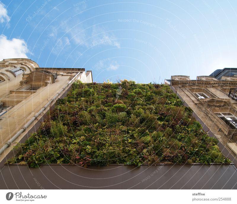 Wandteppich Himmel Natur Sonne Haus Wiese Leben Wand Mauer Kunst Fassade ästhetisch Schönes Wetter Traumhaus