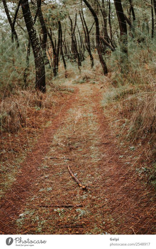 Schöner Waldweg mit Herbstblättern schön Ferien & Urlaub & Reisen Umwelt Natur Landschaft Pflanze Nebel Baum Blatt Park Straße Wege & Pfade frisch hell