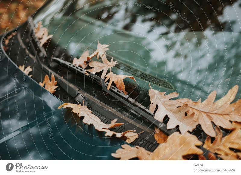 Windschutzscheibe eines Autos voller heruntergefallener Blätter im Herbst Tourismus Sommer Garten Tapete Umwelt Natur Pflanze Baum Blatt Park Wald Straße
