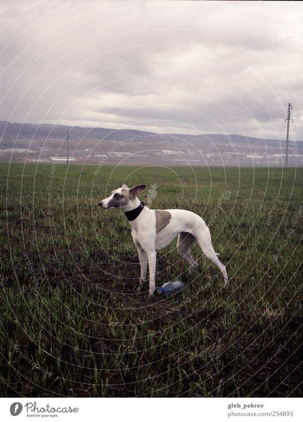 Natur schön Tier Landschaft Hund Wetter Geschwindigkeit dünn Schönes Wetter genießen Haustier klug Klimawandel schleimig