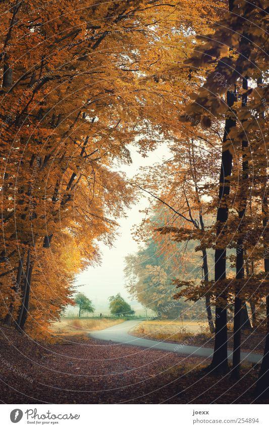 Blick Himmel Natur grün weiß Baum ruhig Einsamkeit Straße Herbst Landschaft braun Feld Idylle ländlich
